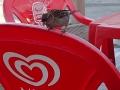 p6130335-oiseaux-chez-rachel