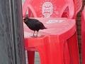 p6130339-oiseaux-chez-rachel
