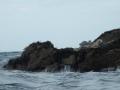 PA170025-17-phoques-gris-photo-de-sandie