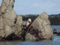 PA170155-17-jeune-phoque-gris-photo-de-sandie
