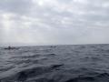 P5150134-Jacques-et-les-dauphins