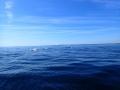 P8150041-les-dauphins