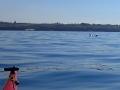 P8310246-deux-dauphins-viennent-vers-moi