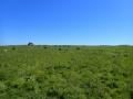 P5250262-les-moutons-de-Quemenes