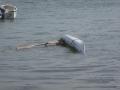 27e-k-juillet-Jef-esquimaute-avec-une-groenlandaise-Photo-de-Pascal-Jouneau