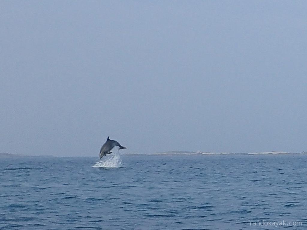 Bien-aimé Randonnée en kayaks de mer, phoques et dauphins en mer d'Iroise  NF22