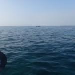 kayaks de mer et les grands dauphins