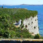 Fort Cigogne