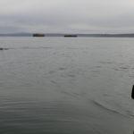 Le phoque suit mon kayak de mer.