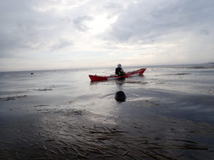 Kayak de mer et jeune phoque dans l'archipel de Molène